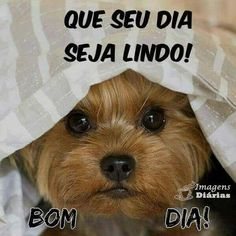 Discover recipes, home ideas, style inspiration and other ideas to try. Namaste Quotes, Frases Namaste, Snoopy Love, Good Morning Messages, Cute Images, Happy Dogs, Like4like, Animals, Facebook