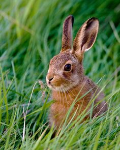 Springtime and here come the bunnies.