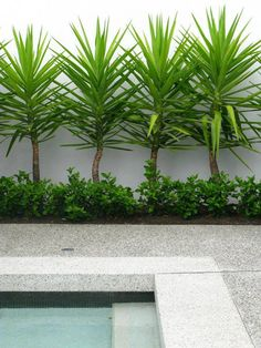 If you are working with the best backyard pool landscaping ideas there are lot of choices. You need to look into your budget for backyard landscaping ideas Tropical Landscaping, Outdoor Landscaping, Tropical Garden, Front Yard Landscaping, Outdoor Gardens, Landscaping Ideas, Modern Landscaping, Landscaping Around Pool, Landscaping Borders