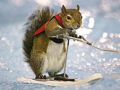 Squirrels in clothing | Squirrel | Funny and Interesting New Images-Photos
