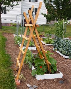 My hubby is going to make me a couple of these for my cucumbers this year! :)
