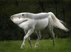 New Animal Species bred in Photoshop by artist Gyyp are bizarre and funny. Gyyp likes to experiment in Photoshop combining animal species to create new ones Beautiful Horses, Animals Beautiful, Beautiful Creatures, Photoshopped Animals, Funny Animals, Cute Animals, Funniest Animals, Bizarre Animals, Exotic Animals
