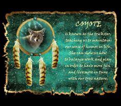 Coyote Spirit Animal |
