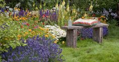 How to have year-round colour in your garden