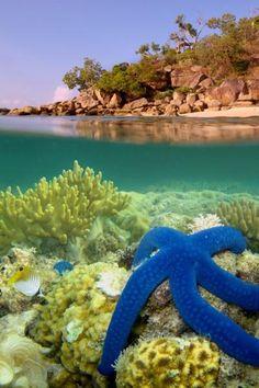 Lizard Island, Great Barrier Reef, Queensland, Australia.  December 2012.