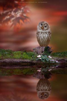 ~ Little Owl ~ by Jasna Matz on 500px