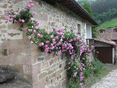 Carmona. Cantabria. Spain. Foto: agus.