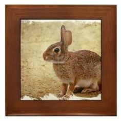 Florida Cottontail Bunny Framed Tile