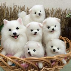 Cute Needle felted project wool animals dogs(Via @checo_lu)