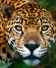 jaguar island at xcarat eco park I photo from endless tours cancun