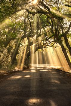 Breaking Through, Botany Bay Road, Edisto Island, by Michael Woloszynowicz, on 500px.