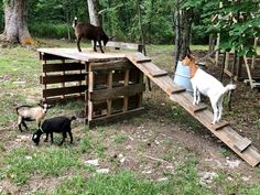 DIY Goat Playhouse & Shelter - The Little Frugal House