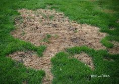 Blog post at Time With Thea : How To Repair Grass Damaged By Dog Urine ~ Step-by-step photo tutorial showing how to easily revive and restore grass that has been dama[..]