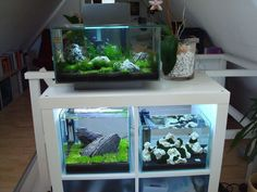 Image result for kallax as fish tank stand #AquariumTanksIdeas