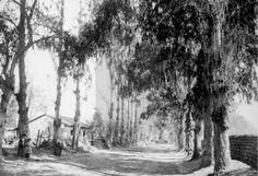 Avenida Tobalaba, principios siglo  XX