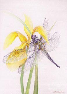 Sheer Wings Painting - Sheer Wings Fine Art Print | Love This Artiness | Крылья, Изобразительное Искусство и Художественные Принты