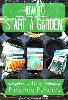 How to Start a Garden while Pinching Pennies - penniesintopearls.com - Tips on how to start a garden for cheap
