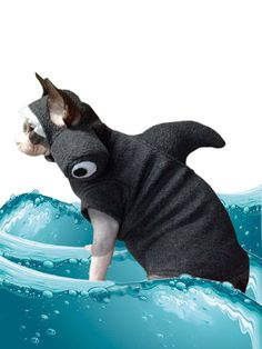 Shark Pet Costume Cat Shirt Hat Sphynx Cat Clothes par SimplySphynx