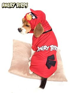 With our Angry Birds Red Bird Pet Costume, you'll have your pup be in perfect gamer form come Halloween! Available at CostumeKingdom! All Angry Birds, Red Angry Bird, Themed Halloween Costumes, Pet Costumes, Angry Birds Costumes, Video Game Costumes, Cheap Pets, Homemade Costumes, Character Costumes