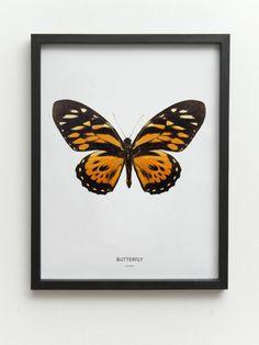 vlinder-oranje