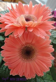 peach flowers - Google Search