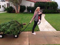 Jessica Capshaw (Arizona Robbins) lugging home her tree. Grey's Anatomy.