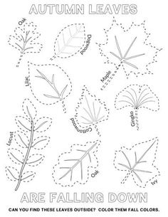 EASY Autumn Leaf Activities and Tracing Page - Tyee Outdoor Experience Easy autumn leaves coloring and tracing page with real leaf shapes. Take them outside on a leaf hunt and enjoy the fall colors or color them inside. Fall Leaves Coloring Pages, Leaf Coloring Page, Coloring Pages For Kids, Kids Coloring, Tracing Art, Tracing Worksheets, Super Worksheets, Autumn Leaf Color, Autumn Leaves