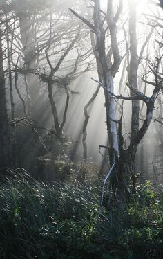 Oh, beautiful forest you are so modest  your secrets lay in the shadows of your branches. oh beautiful forest when will i know? where the wind blows and leaves take flight. oh beautiful forest do not be so polite. I will find your secrets my own way. Maybe even today.