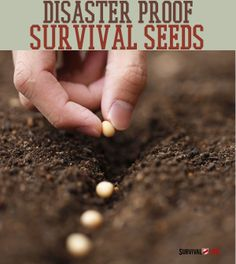 Survival Seeds:| How To Store and Save Seeds | Learn how to store and save seeds for disasters. #SurvivalLife www.SurvivalLife.com