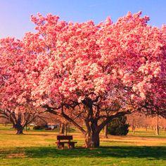 Beautiful tree!