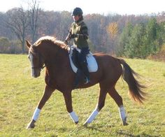 Really Funny Pictures of Horses | Rumple- Sold, Testimonial from Paige (Purchaser)