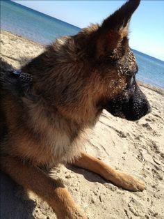 Phoebe on the beach!!!