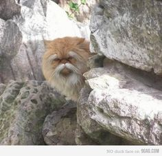 Wise monk in the mountains cat. You may ask him just one question.