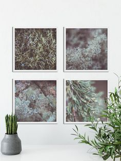 Set of 4 Forest Floor Nature Downloadable Art, Photo Art, Minimalist Art, Digital Download Art, Yoga art, Zen Photo Art, Nature Photography