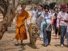 """""""O Grito do Bicho"""": Tailândia tenta impedir monges de lucrarem com tig..."""