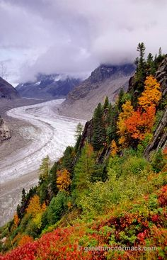 Autumn trees beside the Mer de Glace, Chamonix Valley, French Alps, France. Stock Photo