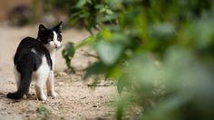 [フリー画像素材] 動物, 哺乳類, 猫 / ネコ, 子猫 / 仔猫 ID:201501020400