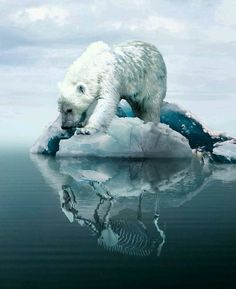 Whimsical And Dreamlike Photo Manipulations By Boby Atmajaya - Eisbären - Animals Yuumei Art, Save Our Earth, Tier Fotos, Environmental Art, Art Plastique, Photo Manipulation, Whimsical, Cute Animals, Creatures