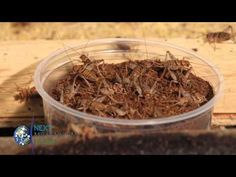 Next Millennium Farms - Insect Farming, Cricket Farming making Insect Protein and Cricket Flour - YouTube