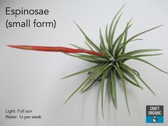 All art is an imitation of nature. Air Plants, Garden Plants, Organic Water, Low Maintenance Plants, Light Crafts, Outdoor Gardens, Roots, Summary, Outdoor Spaces