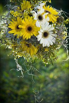 gerber daisy and spanish moss