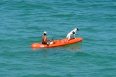 """""""Kayaking Dog"""" - Los Cabos, Mexico.  Photo by Stacy Alynn."""