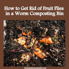 "AP Said: ""How to Get Rid of Fruit Flies in a Worm Composting (Vermicomposting) Bin. We did these three simple things and no longer have fruit flies so we can keep our worm bin in the house! Montana Homesteader"" Pin now, look later. Vermicomposting Bin, Bokashi, Red Wigglers, Red Worms, Garden Compost, Vegetable Garden, Worm Composting, Urban Composting, Fruit Flies"