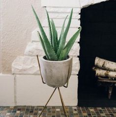 It's time to put your house plants to work for you!