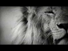 Black and white photographies about african wildlife and endangered species.