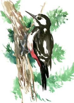 Woodpecker, original watercolor painting, 12 X 9 in, hairy woodpecker, bird art, woodland, forest birds by ORIGINALONLY on Etsy