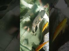 my fish tank view from above Fish Tank, Aquarium, Abstract, Artwork, Youtube, Fish Stand, Art Work, Aquarius, Work Of Art