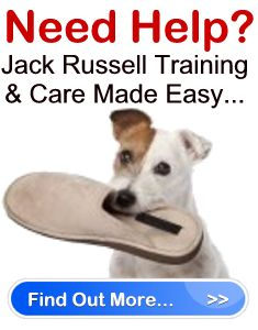 Jack Russell training...OMG where was this a year ago?!