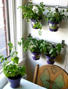 tHE gOOD LIFe: DIY: Herb Wall in the Kitchen
