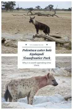Polentswa waterhole can be quite productive regarding animal sightings and it is worth packing a few drinks and snacks and spending some time there. Travel Reviews, Travel Articles, I Want To Travel, Africa Travel, Travel Goals, Tanzania, Where To Go, Travel Inspiration, Travel Ideas